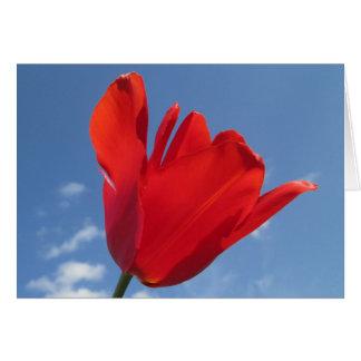 Carte de voeux - ciel bleu de tulipe rouge
