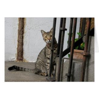 Carte de voeux de chat tigré