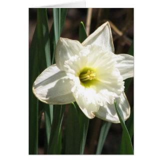 Carte de voeux de fleur de Jonquil