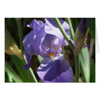 Carte de voeux de jardin d'iris