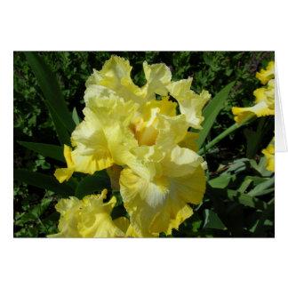Carte de voeux d'iris jaune