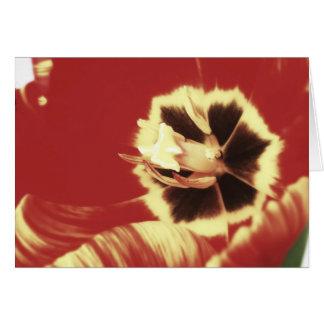 Carte de voeux rouge et jaune de blanc de tulipe