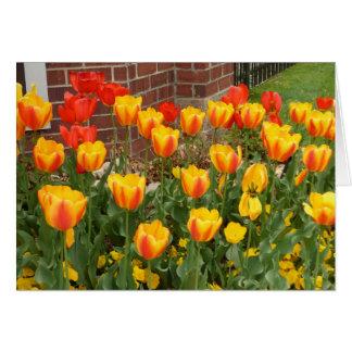 Carte jaune et rouge de tulipes