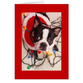 Carte Lumières de Noël de Boston Terrier Père Noël
