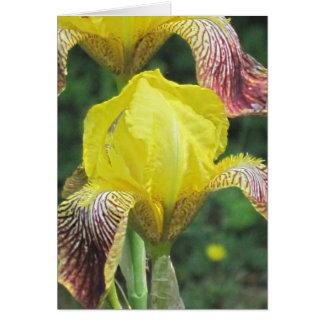 Carte personnalisable de modèle d'iris brouillé