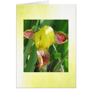 Carte personnalisable d'iris ensoleillé