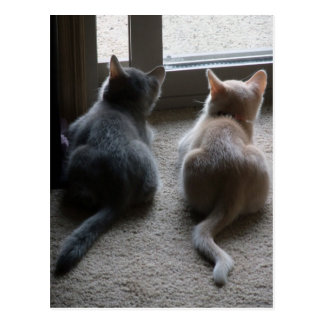 Carte postale de blanc de jaspe et de chaton de Ka