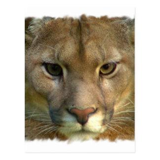 Carte postale de chat de montagne de puma