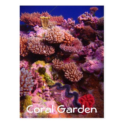 Carte postale de corail de jardin