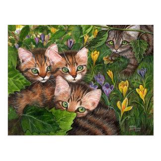 Carte postale de crocus de 4 chatons