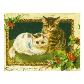 Carte postale de cru de chatons de Noël