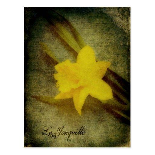 Carte postale de Jonquille de La