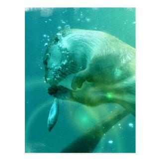 Carte postale de loutre de natation