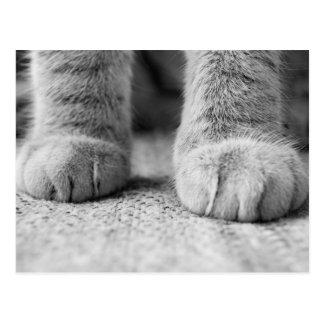 Carte postale de pattes de chat