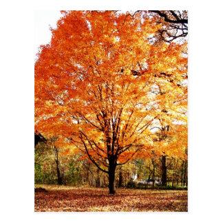 Carte postale de thanksgiving de feuille d'automne