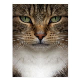 Carte postale de visage de chat tigré