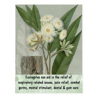 Carte postale d'eucalyptus