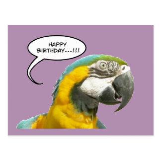 Carte postale drôle d'anniversaire de perroquet