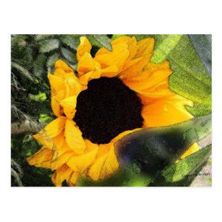 Carte Postale Fleur de Sun
