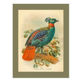 Carte Postale Illustration colorée de faisan d'oiseaux vintages