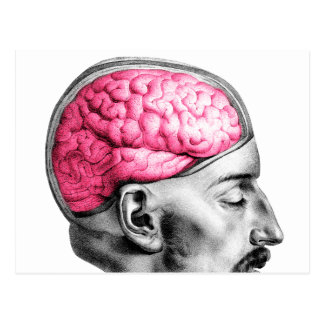 Carte Postale Illustration médicale vintage de cerveaux