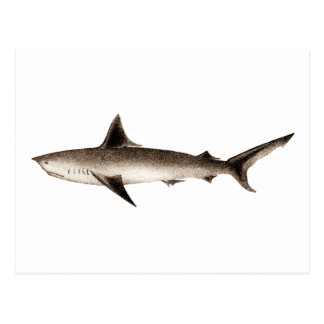 Carte Postale Illustration vintage de requin - rétro modèle de