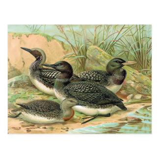 Carte Postale Illustration vintage d'oiseau de dingues