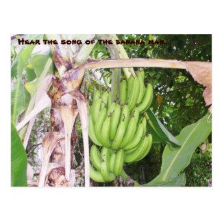 Carte postale jamaïcaine d'homme de banane