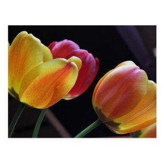 Carte postale jaune et rouge de tulipes