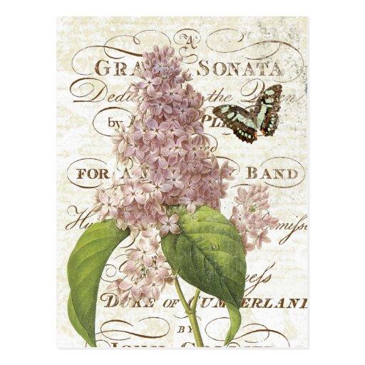 Carte postale lilas botanique française vintage