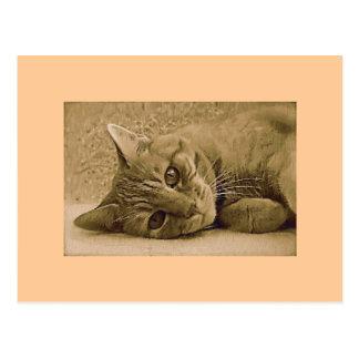 Carte postale orange de chat tigré
