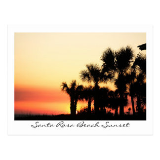 Carte Postale Palmiers de plage de Santa Rosa de coucher du