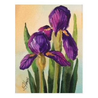 Carte postale pourpre d'iris
