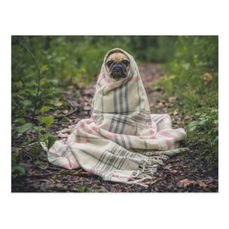 Carte Postale Pug in a blanket