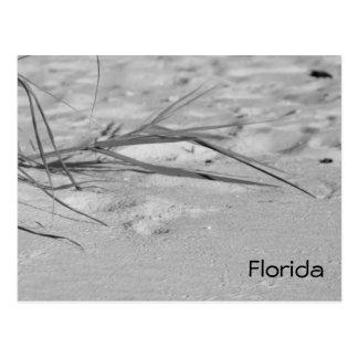 Carte Postale Sable de la Floride