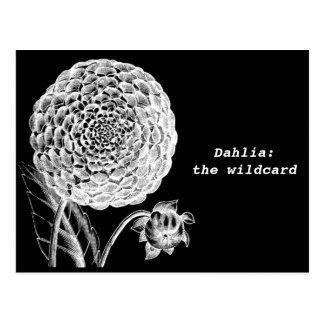 Carte postale vintage de gravure de dahlia