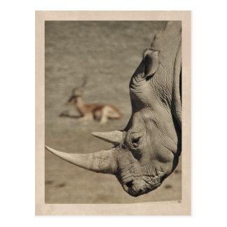 Carte postale vintage de rhinocéros