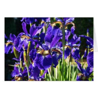 Carte pourpre d'iris (horizontale)