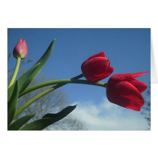 Carte rouge de ressort de tulipes