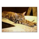 Carte somnolente de chat de la savane