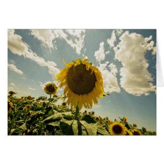 Carte Tournesol, fleur de Sun, beau ciel