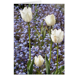 Carte Tulipes blanches