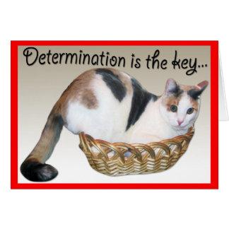 Cartes de chat, encouragement drôle à un ami