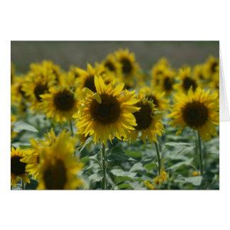 Cartes de note de ces fleurs d août
