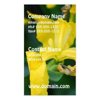 Cartes de visite d'iris jaune modèle de carte de visite