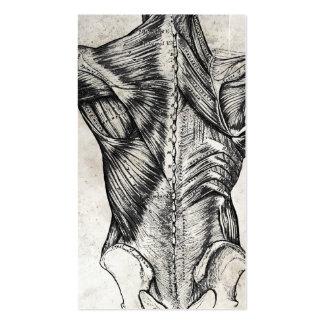 Cartes de visite vintages de dos d'anatomie