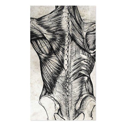 Cartes de visite vintages de dos d'anatomie cartes de visite professionnelles