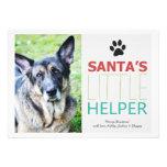 Cartes plates de vacances de photo d'animal famili cartons d'invitation