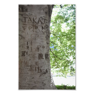 Carved in a Tree Central Park Nature Photography Photo Print