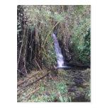 Cascade sur la traînée d'automnes d'Akaka Carte Postale